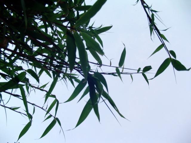 Bambu 870 (Remilo)