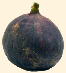 Ficus carica (frukt) 870_picnik